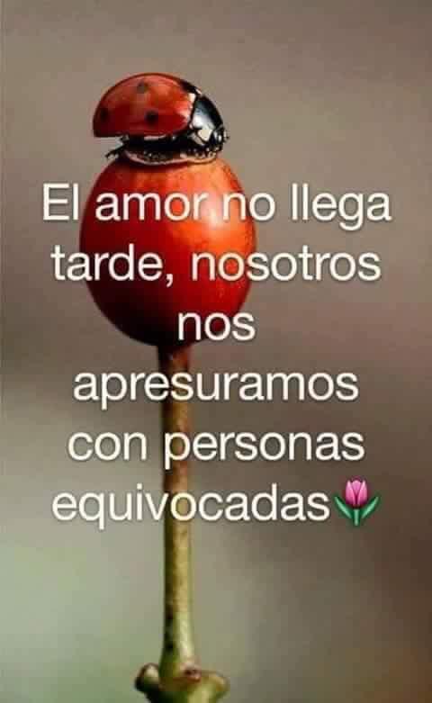Imagenes Con Frases Sobre El Amor Para Facebook