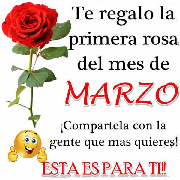 Te regalo la primera rosa del mes de marzo